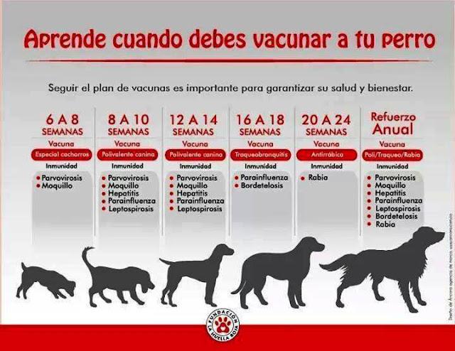 plan preventivo en perros