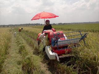 Lowongan Kerja: PT Corin Mulia Gemilang www.guntara.com