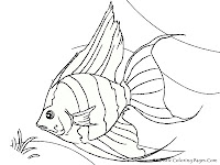 AngelFish Printable Coloring Sheet Realistic