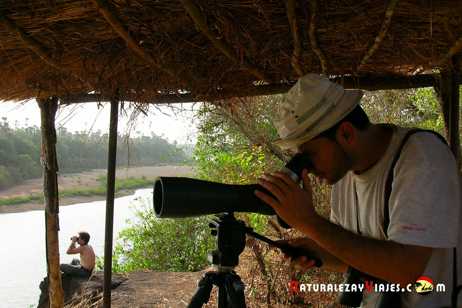 Birdwatching en Gambia