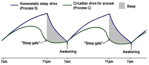 Аденозин: нейропротективный антифриз мозга.