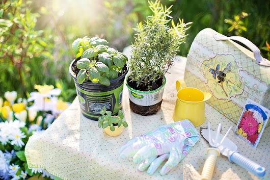 In Search of the Best Gardening Tools