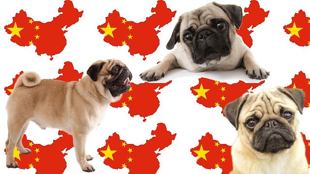 Pug o Doguillo raza china