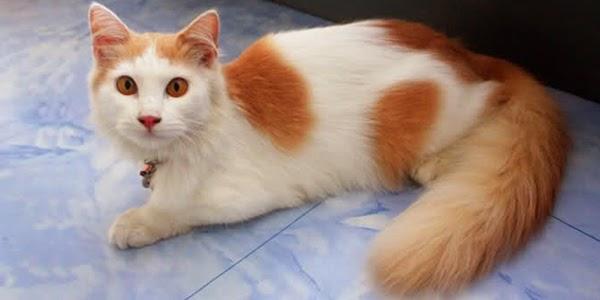 Kisah Inspiratif Kucing dalam Peradaban Islam