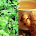 The Amazing Combination of Ginger and Moringa (Malunggay) Can Fight Several Diseases
