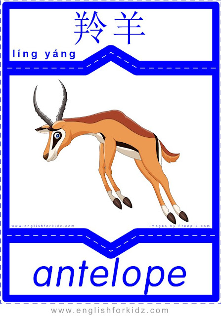 Antelope - English-Chinese flashcards for wild animals topic