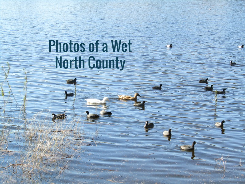 Photos of a Wet North County