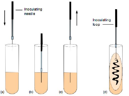 isolasi bakteri metode cawan gores