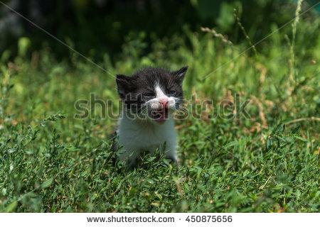 Penyebab Kucing Bisa Kabur Dari Rumah