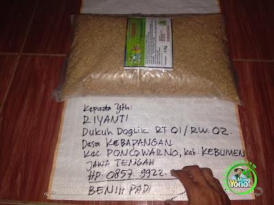 Benih Padi TRISAKTI Pesanan RIYANTI Kebumen, Jateng.  (Sebelum di Packing)