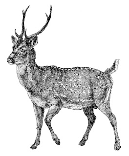 deer image illustration