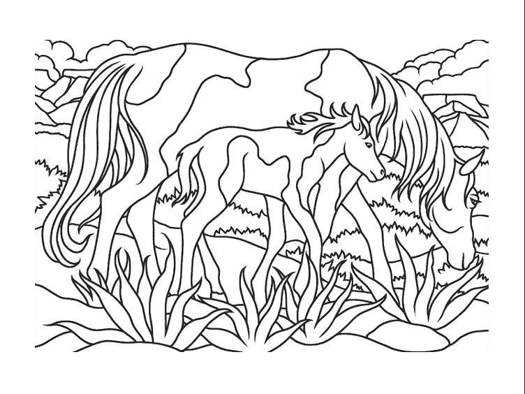 Tranh tô màu ngựa mẹ và con