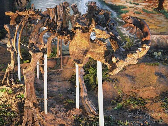 foto fosil dinosaurus di museum sangiran