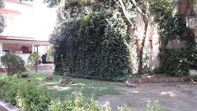 çimen-otel