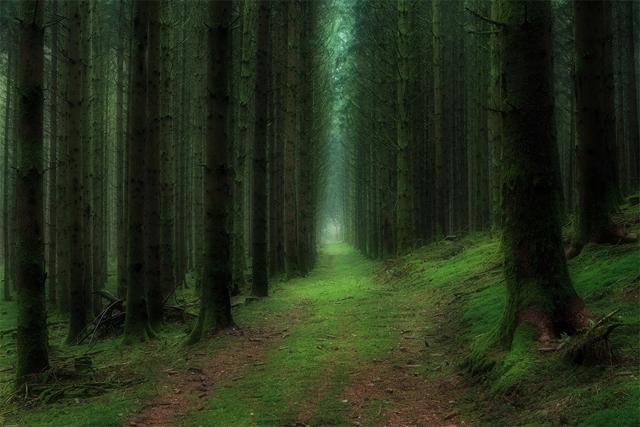 Fransa'da ormanın derinlikleri