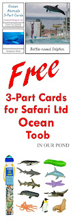 FREE 3-Part Cards for Safari Ltd Ocean Toob from In Our Pond