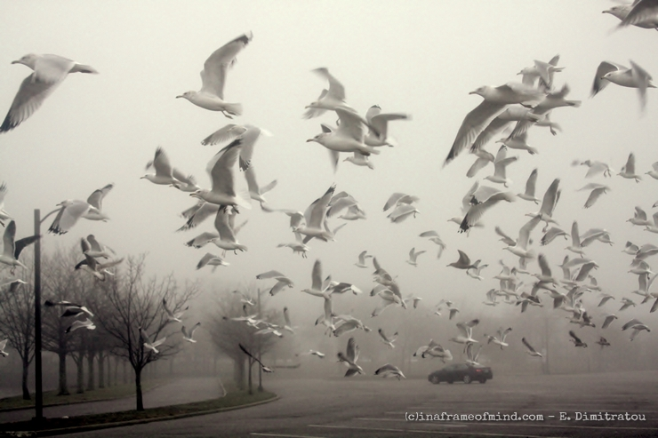 Seagulls in morning fog