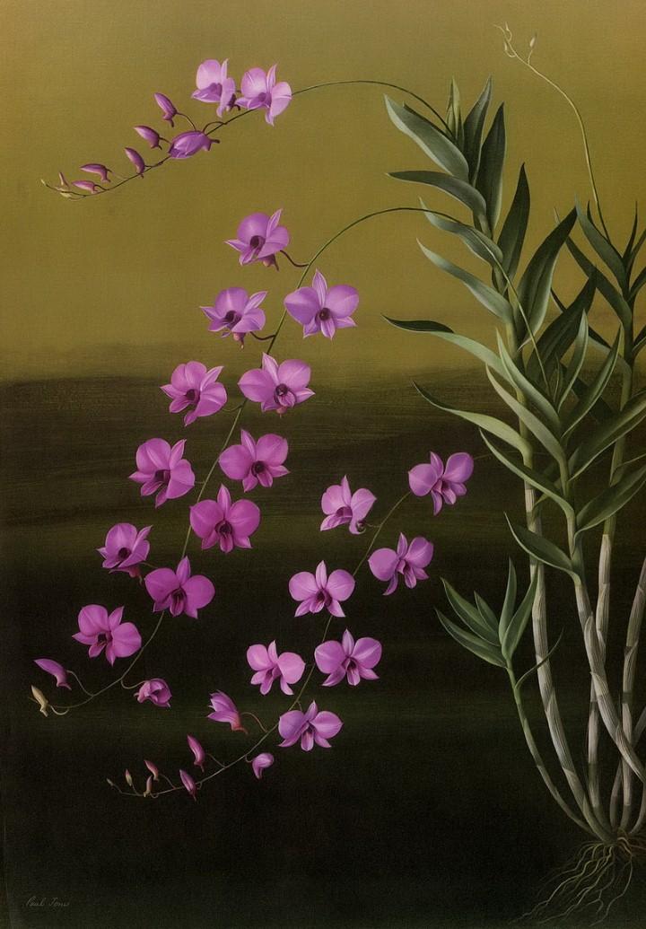 Paul Jones. Акварельные рисунки цветов 19