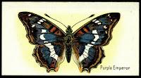 motyle do wycinania