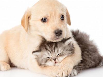 Perro y gato conviven