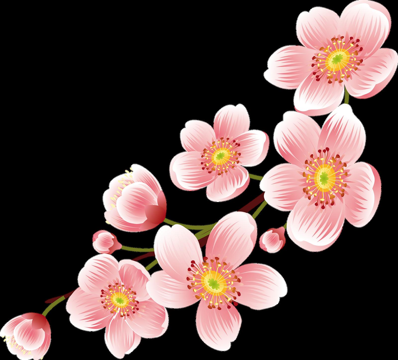 Frames & Png: Cherry Blossom