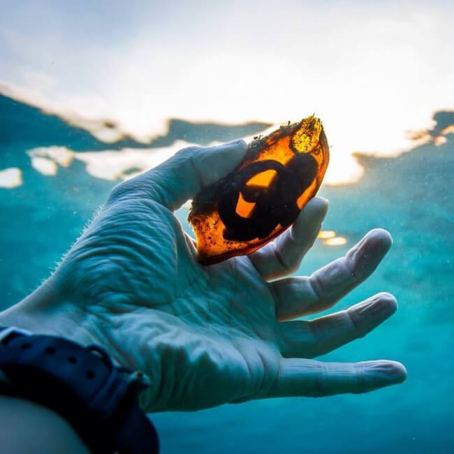 22 Breathtaking Images Of Things You've Never Seen Before - A shark's egg in the light seen through the water