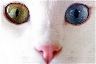 Image result for fun art mata dua warna