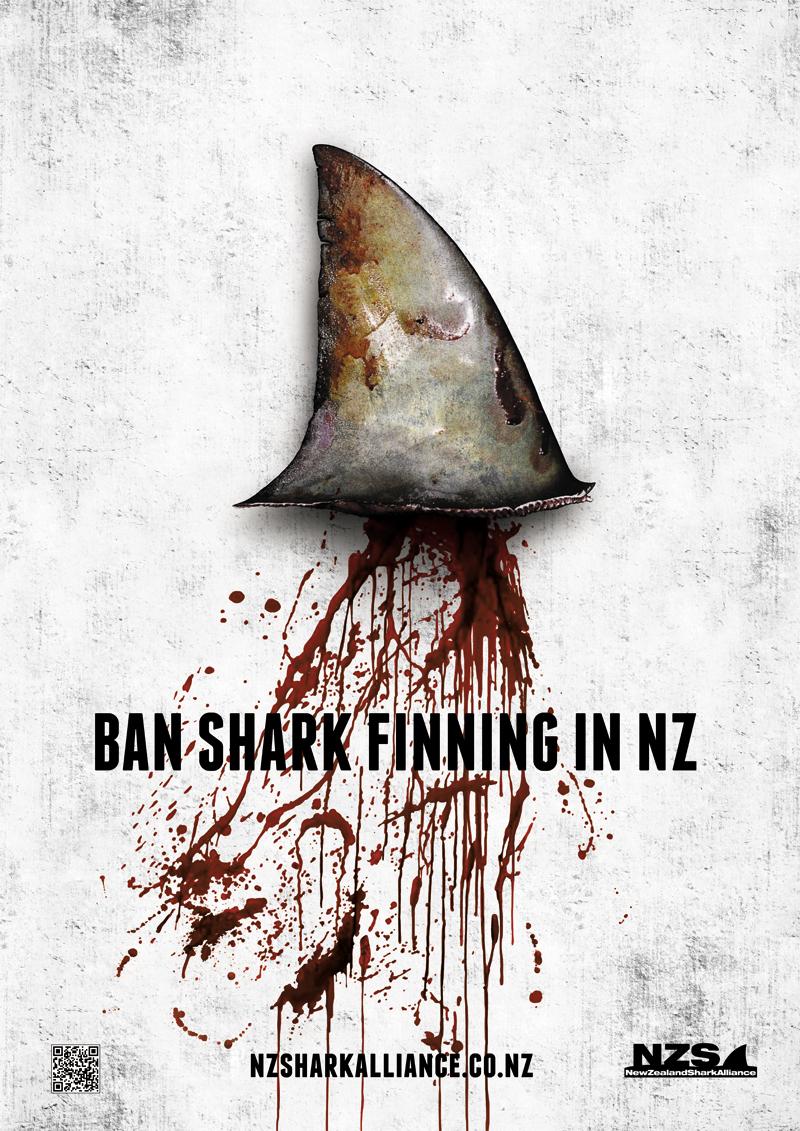 Mat Brady Ban Shark Finning In Nz