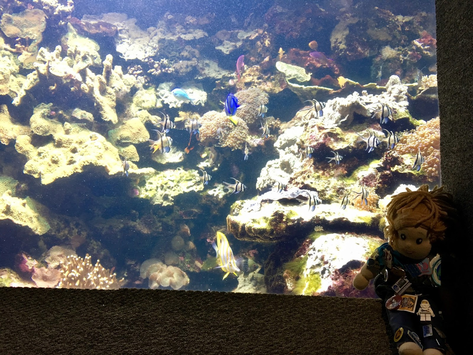 Abby 39 S Aquarium Adventures