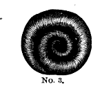 "Hair in a coil from ""Self-Instructor in the Art of Hair Work"" by Mark Campbell, 1867,"