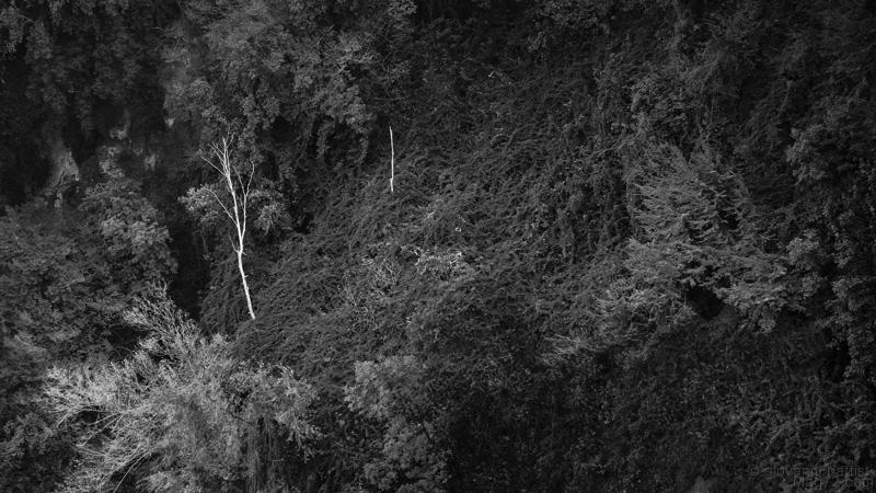 Vegetazione alla cascata delle Marmore