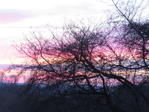 pink sunrise behind branches