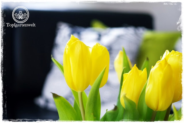 Gartenblog Topfgartenwelt Deko: gelber Tulpenstrauß vor einer schwarzen Couch