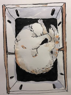 White Cat sleeping in a peach box. Ink drawing by David Borden.