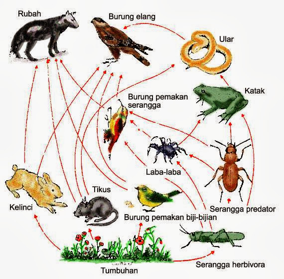 Kegiatan Praktikum 1 Ekosistem 1 Judul Percobaan Ekosistem Darat