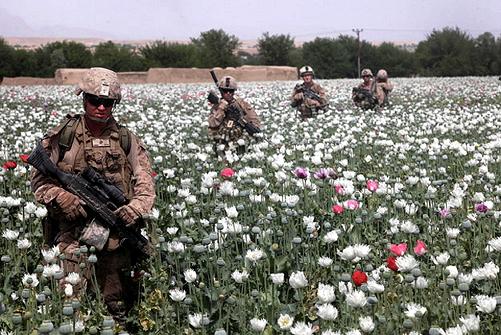 Image result for cia poppy blogspot.com