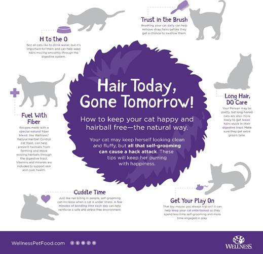 Steps to take to prevent hairballs