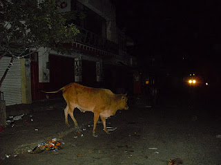 A typical night scene in Maicao, Colombia - cattle wandering the streets!