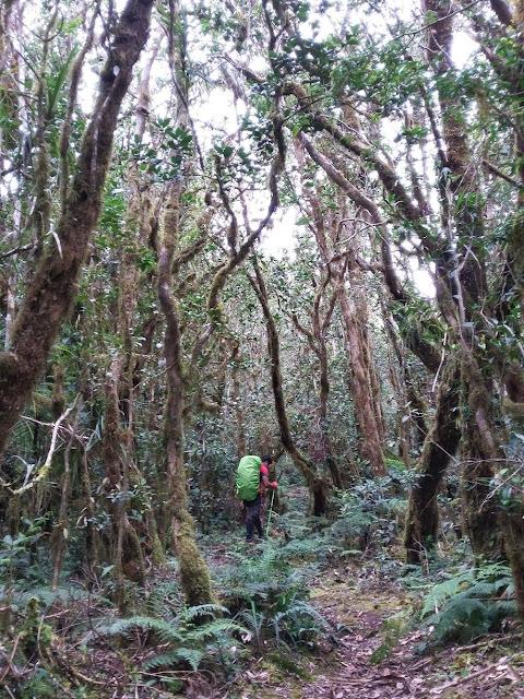 Mossy Forest ng Mt. Napulauan