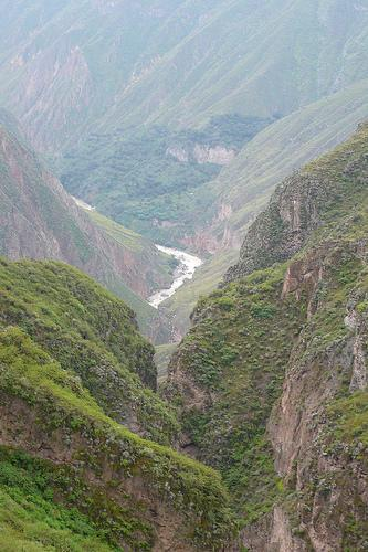 Foto de vegetación en el Cañón del Colca