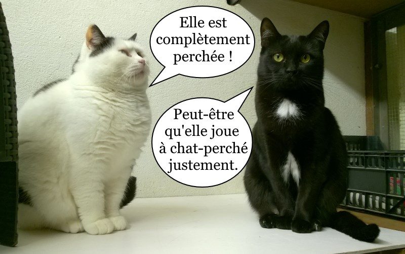 chats a adopter toulouse