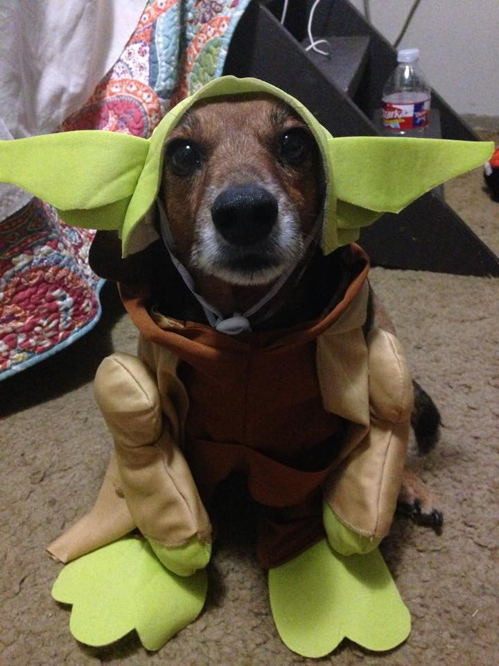 View from the Birdhouse & View from the Birdhouse: Dear Abby - Pets in Halloween Costumes