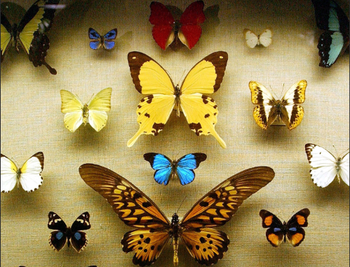 Horniman Museum And Gardens Have Submitted An Exciting Planning Application  To Build A Butterfly House In The Gardens, Replacing The Park Keeperu0027s  House At ...