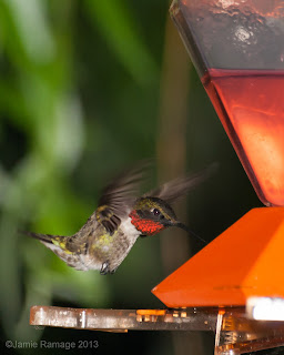 Humming bird, feeder.  www.jamieramage.com