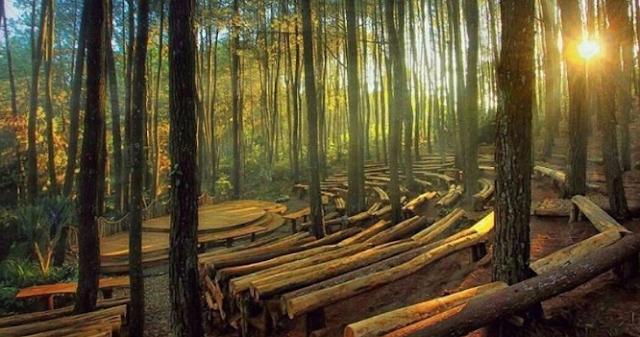 Yuk ... Jelong-Jelong ke Hutan Pinus Mangunan Jogja! Simak dulu Alamat, Harga Tiket, Review serta Peta Lokasi nya