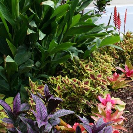 The Rainforest Garden Tropical Color In The Summer Garden