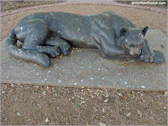 Sleeping Panther, Fort Worth