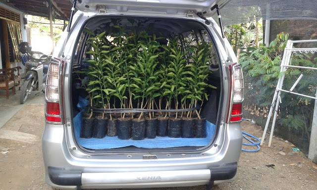 jual bibit bibit unggul | pengiriman bibit tanaman | proses pengiriman bibit tanaman | pengiriman bibit cepat dan aman