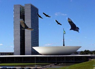CONVERSA PIABA: URUBUS INVADEM O CÉU DE BRASILIA