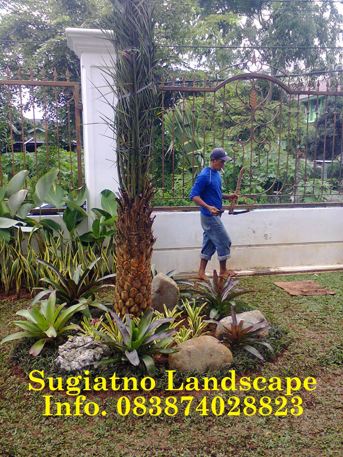 Tukang Taman Taman Minimalis Depan Rumah Desain Taman Rumput